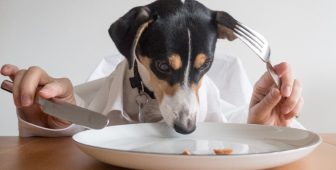 Can Dogs Eat Yams?