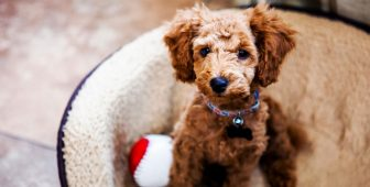Pawternity Leave – Companies That Acknowledge Your New Puppy's Needs