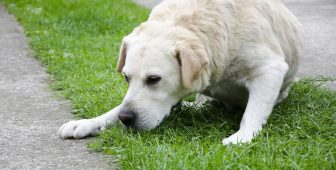Dog Throwing Up Bile – What's Causing It?