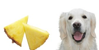 Can Dogs Eat Pineapples – A Complete Guide