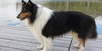 15 Long-Haired Dog Breeds You Need To Know About