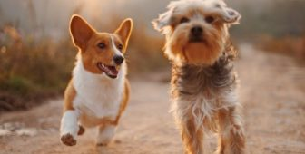 Glucosamine Side Effects In Dogs