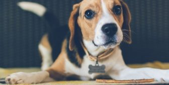 Causes And Cures Of Dog Upset Stomach