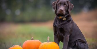 Halloween And Pets – Safety, Pet Party Ideas And More
