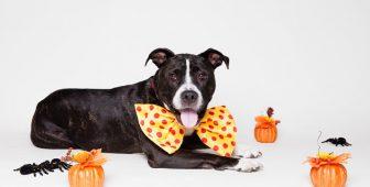 Keeping Your Dog Safe During Halloween + Bonus: Pet Halloween Party Ideas