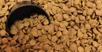 How Much Food Should You Feed Your Dog?