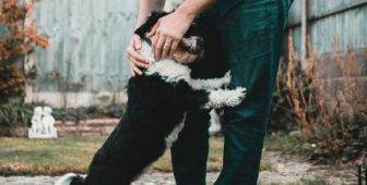 CBD Oil For Dog Anxiety Demystified