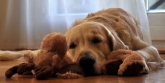 Dog Stomach Gurgling – Is It Normal?