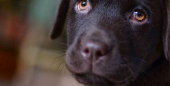 CBD Oil For Dog Lymphoma