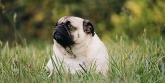 10 Ways To Make Your Dog Lose Weight